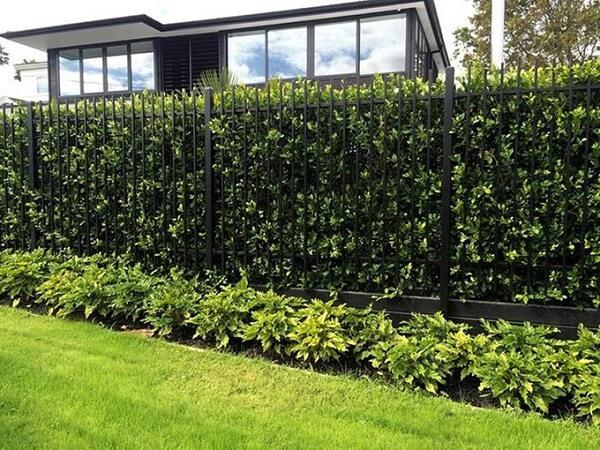 Mẫu tường rào sắt màu đen được trang trí bằng cây xanh lãng mạn